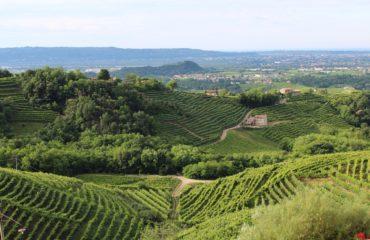 Prosecco vineyards - Treviso